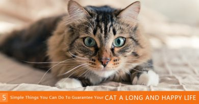 keep your cat healthy and long life