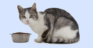 Dietary Health Tips For Feeding your Feline