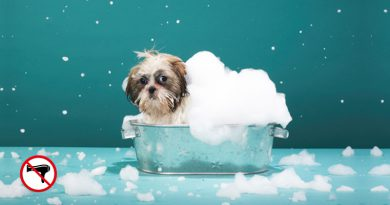 Don'ts for Cleaning Your Dog