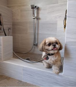 Dont bathe Dog too frequently