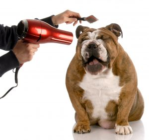 dont use hair dryer for dog