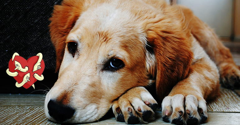 Heartworms Disease In Pets