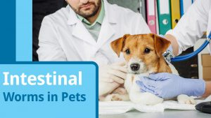 Questions To Determine Pet Is Suffering From Worms
