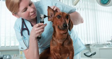 Ear Infections In Dogs: Root Causes And Cure