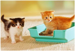 litter Boxes For Cats