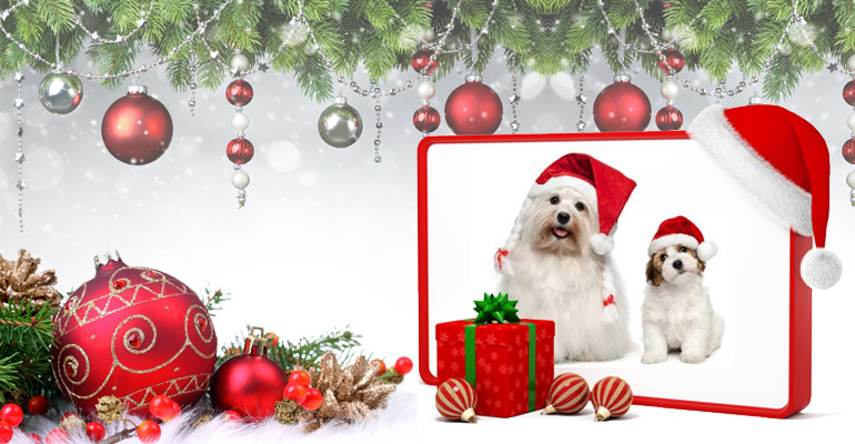dogs-offers-for-new-year