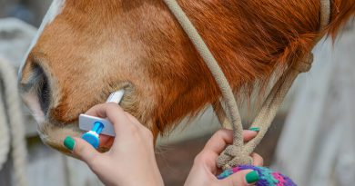 Prevent Worms In Horses