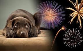 fireworks-for-dogs