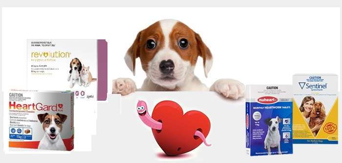 heartworm-for-dogs