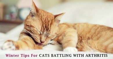 Cat Joint Care