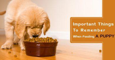 Feeding-A-Puppy