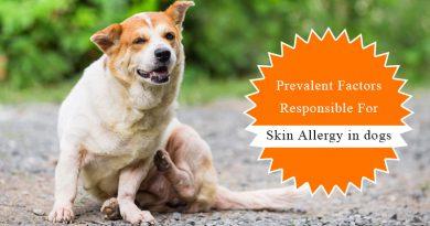 Skin-Allergy-dogs