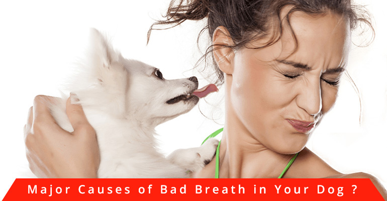 bad-breath-in-dog