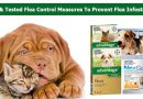 Tried & Tested Flea Control Measures to Prevent Flea Infestations