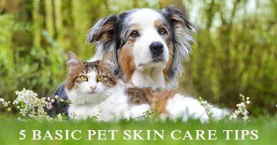Pet Skin Care Tips