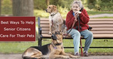 Senior Citizens Care For Their Pets