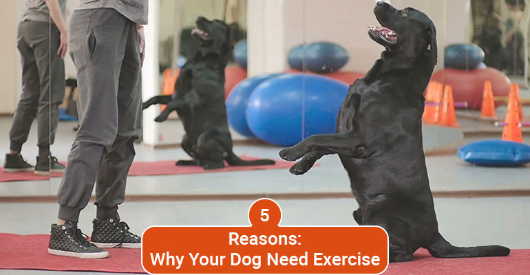 Why Your Dog Needs Exercise