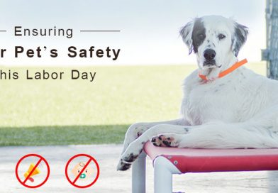 Pet's safety this labor day