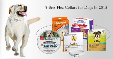 best-flea-tick-collar