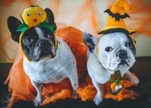 Dogs-in-Halloween-costume