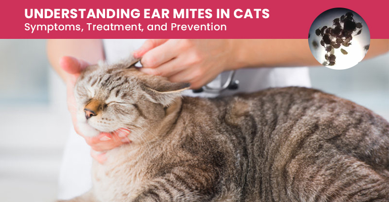 Cat Ear Mites Symptoms Treatment And Prevention,Enchilada Recipe Authentic