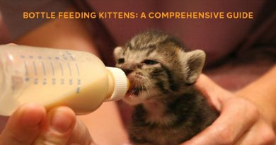 uide-to-Bottle-Feeding-Cats