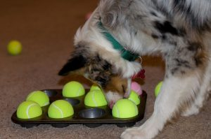Sniffing-the-Treasure