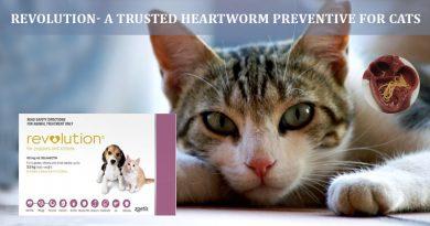 Revolution heartworm preventive for cats