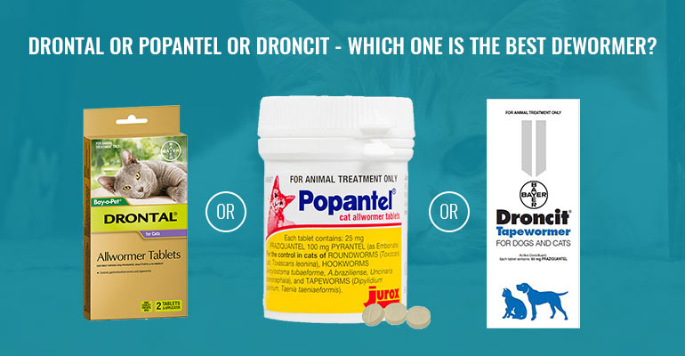 Drontal or Popantel or Droncit - Which one is the Best Dewormer? - BudgetVetCare Blog
