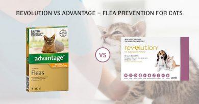 Revolution to Advantage Flea Protection for Cats