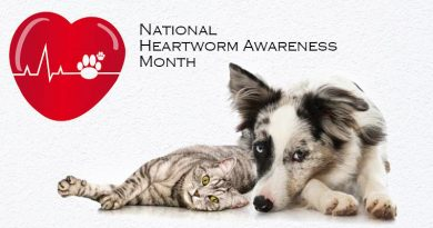 nuheart heartworm amazon