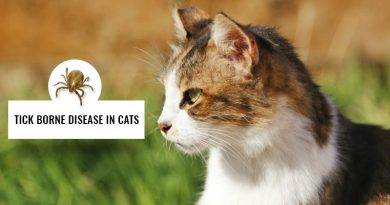 Tick-borne-diseases-in-cats
