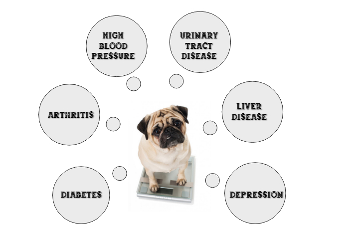 Obesity Related Issues in pets