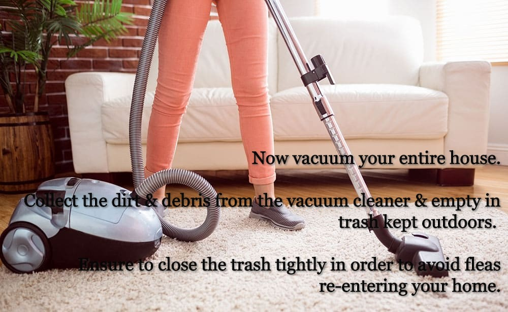 vacuuming entire house