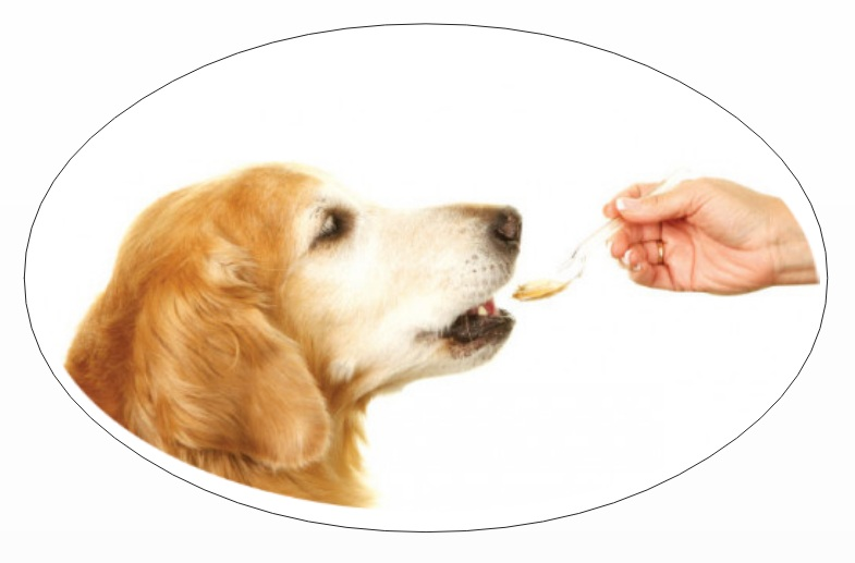 Pet parents mistake: not deworming the dog