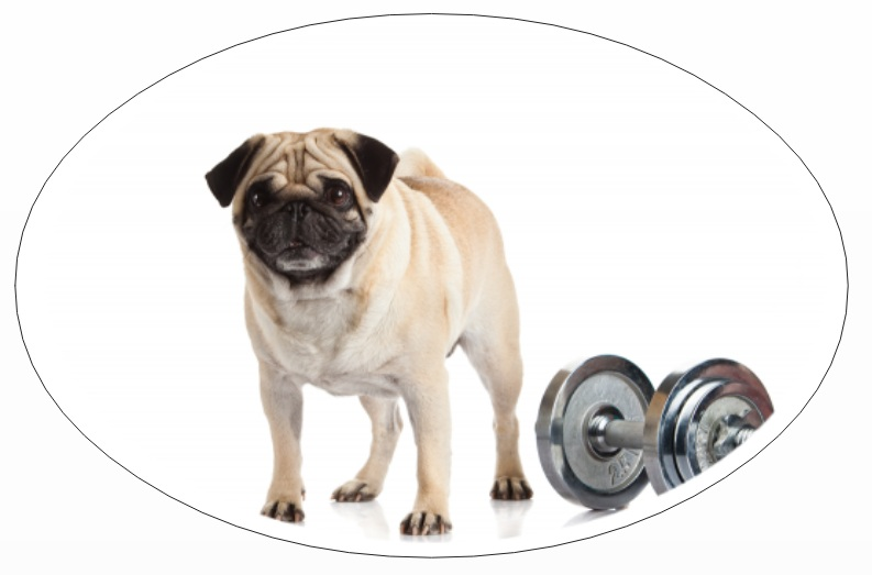 Pet parents mistake: not making your dog exercise