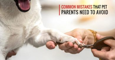 Mistakes of pet parents