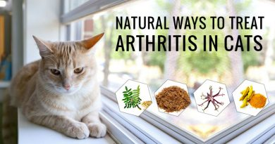 Natural Ways to treat Arthritis in Cats