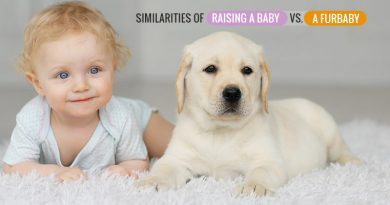 Raising a Baby vs. a Furbaby