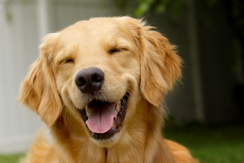 Dogs Make You Laugh