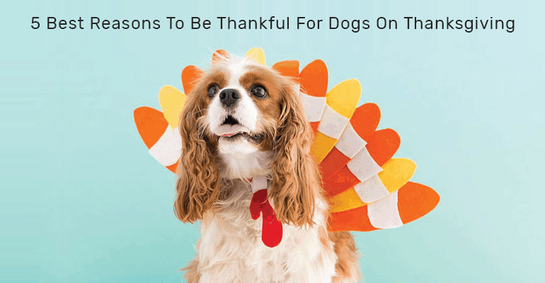 5 Reasons To Be Thankful For Dogs On Thanksgiving