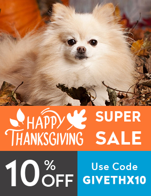 Thanksgiving Sale Starts Now!