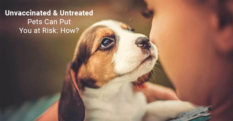 Unvaccinated Pets Can Put You at Risk: How?
