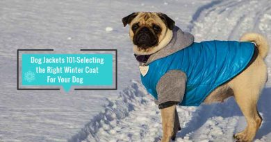Winter Coat For Your Dog