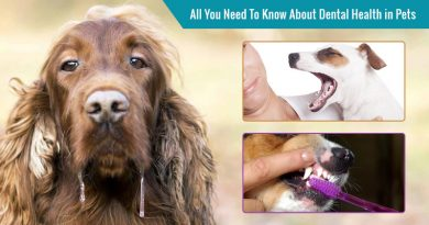 National Pet Dental Health Month