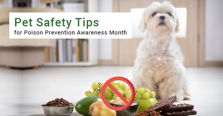 Poison Prevention Awareness Month