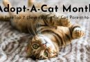 Adopt-A-Cat Month This June – Top 7 Tips for Cat Parent-to-be
