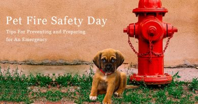 Pet Fire Safety Day – Tips For Preventing and Preparing for An Emergency
