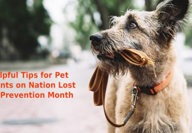 Helpful Tips for Pet Parents on National Lost Pet Prevention Month
