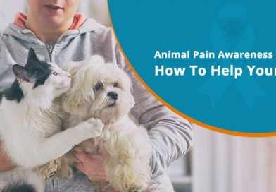 Animal Pain Awareness Month – How To Help Your Pet